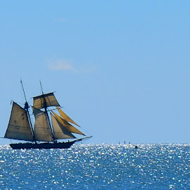 Sailing on a Jeweled Sea by Carl Testo - Transportation Boats ( wh, ocean, sunlight, sailboat )