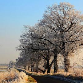 *** by Zanna Zaka - Landscapes Prairies, Meadows & Fields ( england, winter, weather, trees, travel )