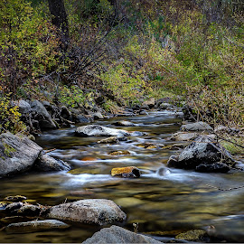 Creek in Idaho by Brent Lindsay - Landscapes Waterscapes ( water, stream, leaves )