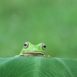 Kangen dek juminten by Kurito Afsheen - Animals Amphibians