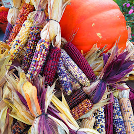 Autumn by Will Lazarus - Nature Up Close Gardens & Produce ( pumpkins corn indian fall autumn,  )