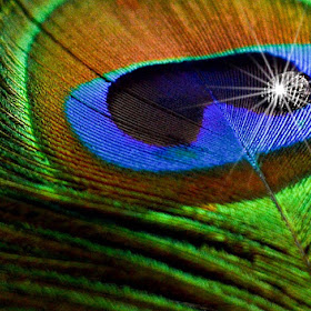 sparkling dew drop.jpg