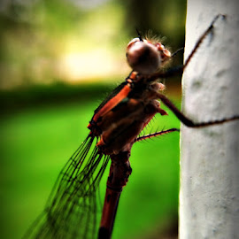 DragonFly by Lettie Maciel - Instagram & Mobile iPhone ( macro, bug, dragonfly, insect, close up )