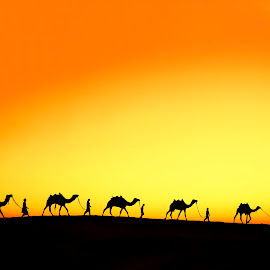 Caravan ! by Agha Ahmed - Landscapes Deserts ( desert, travelling, silhouette, sunset, camels, silhouettes, journey, travel, sunrise, landscape, travel photography )