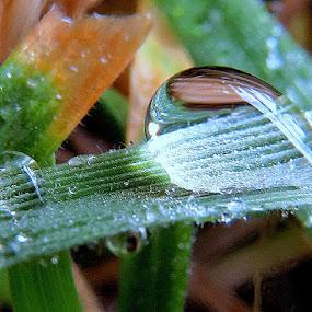 by Renata Kučan - Nature Up Close Natural Waterdrops