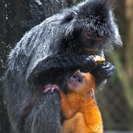 by Robert Cinega - Animals Other Mammals
