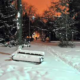 Winter in the park by Ovidiu Pauliuc - City,  Street & Park  City Parks