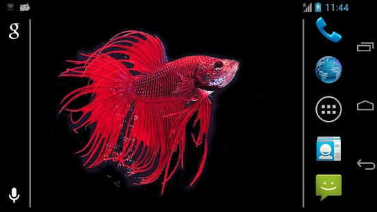 Betta fish live wallpaper free apk for iphone download for Betta fish game