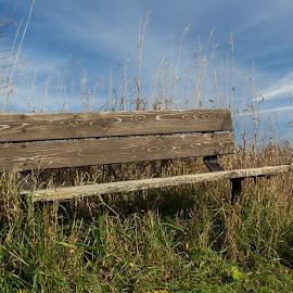 by Linda Pickrell - City,  Street & Park  City Parks ( field, linda pickrell, bench, park, park bench, bronte,  )