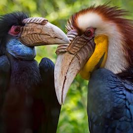 by Shelly Wetzel - Animals Birds