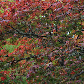 Fall Abstract by Kathryn Severson - Nature Up Close Trees & Bushes