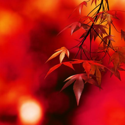 Autumn Colors LOGO-APP點子