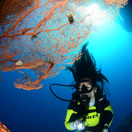 by Damir Zurub - Landscapes Underwater ( red sea, diving, egypt )