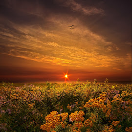 The Light of Day by Phil Koch - Landscapes Prairies, Meadows & Fields ( vertical, photograph, farmland, seagulls, yellow, leaves, love, sky, nature, tree, autumn, flower, orange, twilight, agriculture, horizon, portrait, dawn, environment, season, serene, trees, floral, inspirational, wisconsin, natural light, phil koch, spring, photography, sun, farm, horizons, inspired, clouds, office, park, green, scenic, morning, shadows, wild flowers, field, lake michigan, red, blue, sunset, fall, peace, meadow, summer, sunrise, earth, landscapes )