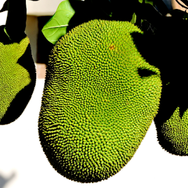 Jackfruits by Yusop Sulaiman - Nature Up Close Gardens & Produce