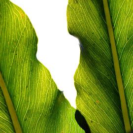 Meet me halfway by GLachowicz - Novices Only Flowers & Plants ( nikon d3200 leaves halfway meet me macro veins )