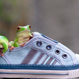 couple frog in shoes by Robert Cinega - Animals Amphibians ( artistic, object )