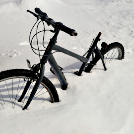 Snow Cycle :) by Rajarajeswaran  Sathyamoorthy - Transportation Bicycles ( bike, snow, snow cycle, storm, bicycle )