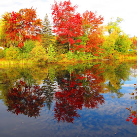 Fall colors of NH by Denise Noel - Novices Only Landscapes