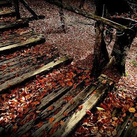 by Dolores Dubravica - Landscapes Forests