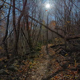 Walk in the Woods by Byran Forbes - Landscapes Forests ( hdr, 2014, va, shenandoah, winery )