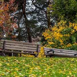 Two Different Views by Rob Taylor - City,  Street & Park  City Parks ( colour, park, bench, autumn, leaves, public, furniture, object )