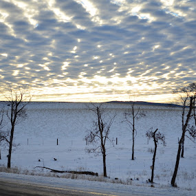 by Selah Madland - Landscapes Mountains & Hills ( clouds, winter, tress, cold, dead, outside, sun )
