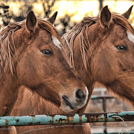 Horses of Corrales NM by Victor Pizzola - Digital Art Animals