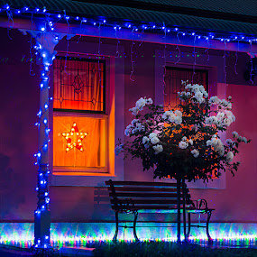 Christmas Lights and Roses by Zdenka Rosecka - Public Holidays Christmas ( lights, bench, roses, christmas, house )