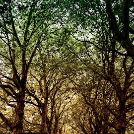 Autumn Corridor by Andreia Maricato - City,  Street & Park  City Parks