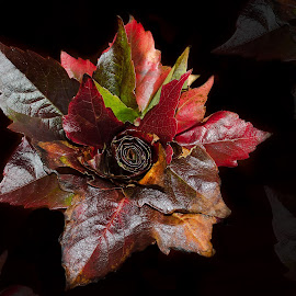 Autumn posy by Nicole Williams - Novices Only Abstract ( colour, autumn, fall, leaves, flower )