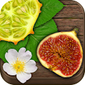 Exotic Fruits & Vegetables PRO icon
