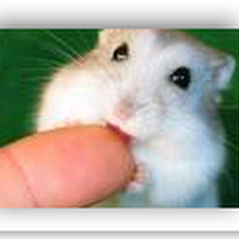 Lawsuit traces transplant death to hamster