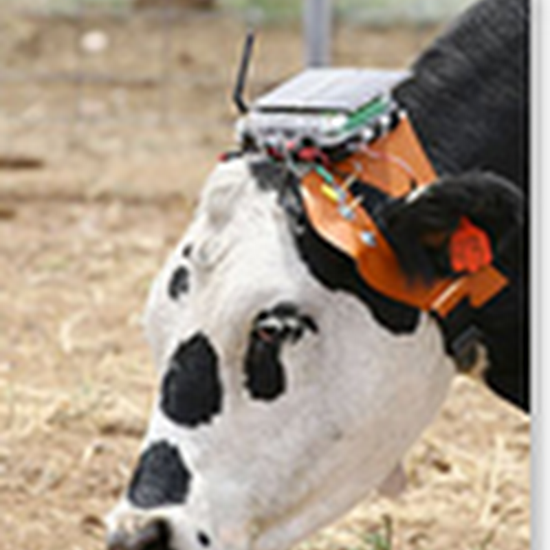 Ear-A-Round headsets keep tabs on cows, make farming easier
