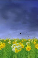 Screenshot of Daffodils Free Live Wallpaper