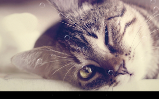 Screenshot of Funny Cat Live Wallpaper
