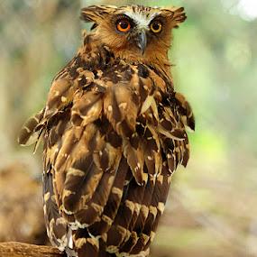 by Iwan MS - Animals Birds ( #GARYFONGPETS, #SHOWUSYOURPETS )