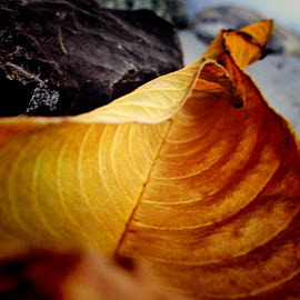 Dried leaf on stones by Janette Ho - Instagram & Mobile iPhone