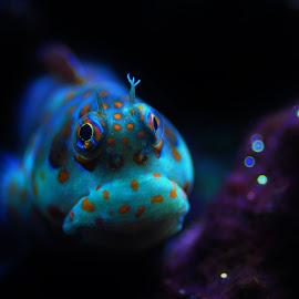 Grumpy Fish by Richard James - Animals Fish (  )