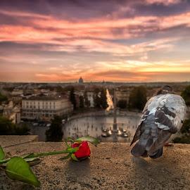 Romantic Rome by Cucu Andrei - City,  Street & Park  Vistas ( love, pigeon, rose, rome, sunset, romantic, italy, flower, city, dove )