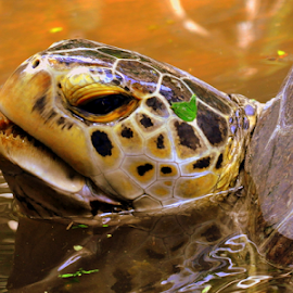 take a breath by Dino Rimantho - Animals Reptiles ( wild, reptiles, animals, nature, turtle )