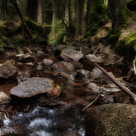 fairytale forrest 1 by Dirk Rosin - Landscapes Forests ( skog, forrest, challenge, wald, norway,  )