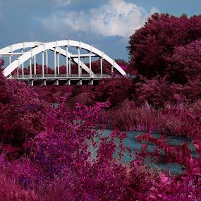 Purple Nature by Zeljko Secujski - Nature Up Close Trees & Bushes ( water, srbija, red, plavo, oblaci, veliki backi kanal, serbia, sombor, most, crvena suma, purple wood, bridge )