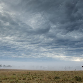 Insignificant by Sue Niven - Landscapes Prairies, Meadows & Fields ( clouds, paddock, australia, house, landscape )