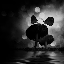 The Butterfly by Lucky Santika - Black & White Macro