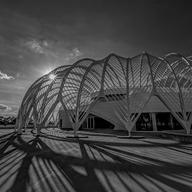 Shadows and Steel by Bill Camarota - Buildings & Architecture Public & Historical ( modern, university, monochrome, florida, polytechnic, campus )