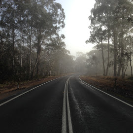 Foggy Road to Canberra by Dawn Simpson - Landscapes Weather ( tarmac, highway, fog, weather, gum trees, road )