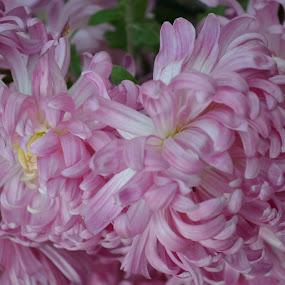 by Shrenik Dodhia - Nature Up Close Flowers - 2011-2013