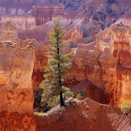 Bryce Canyon by Jim Antonicello - Landscapes Mountains & Hills