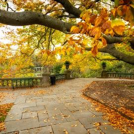 Dreamworld by Linda Karlin - City,  Street & Park  City Parks ( nature, park, autumn, gardens, landscape )